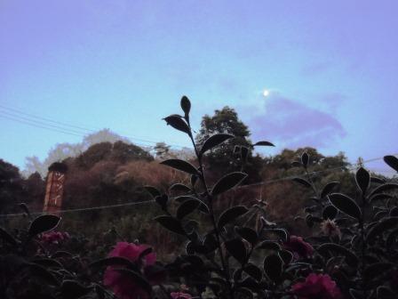 有明の月(1月)1