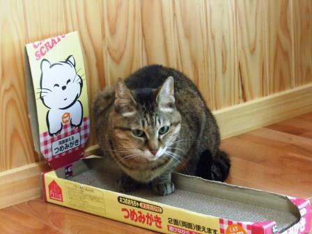 のんちゃん4(2015-04-18)