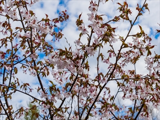 2015-5-25 四阿山14 (1 - 1DSC_0032)_R