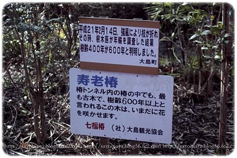 sayomaru12-534.jpg