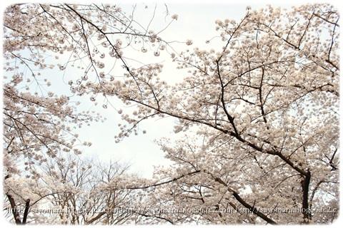 sayomaru12-950.jpg