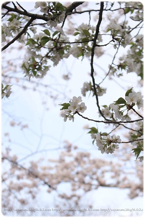 sayomaru12-952.jpg