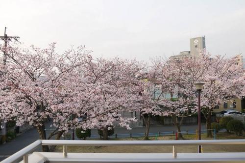 sakura 004