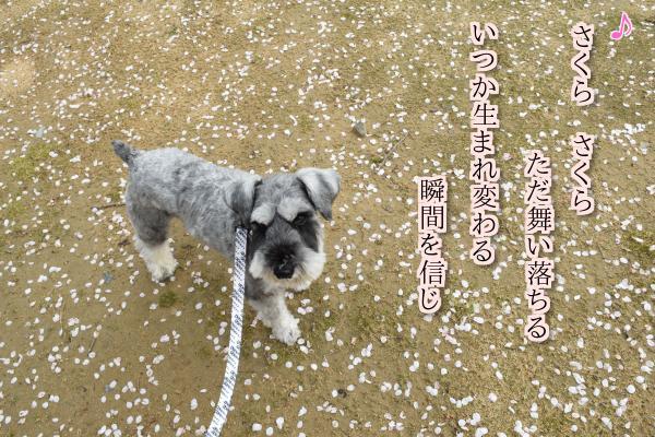 DSC_0159_20150411_con_text2.jpg
