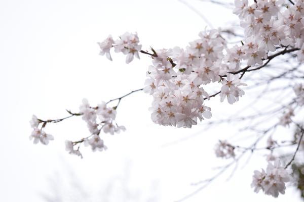 DSC_0245_20150412_con.jpg