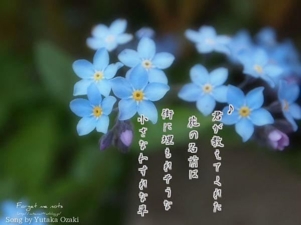 Forget-me-not_text3.jpg