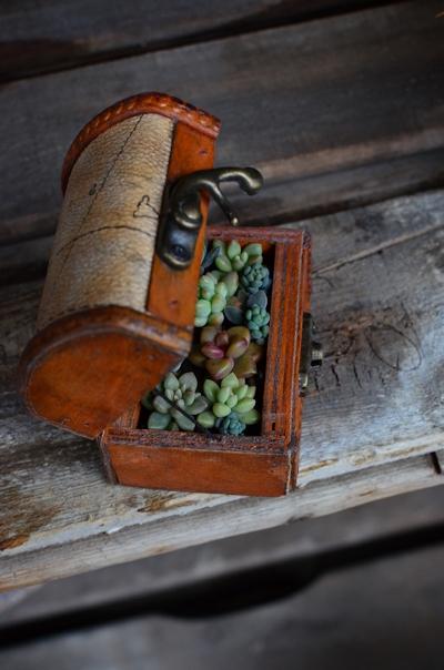 アンティーク木箱に多肉の寄せ植え20150308_03