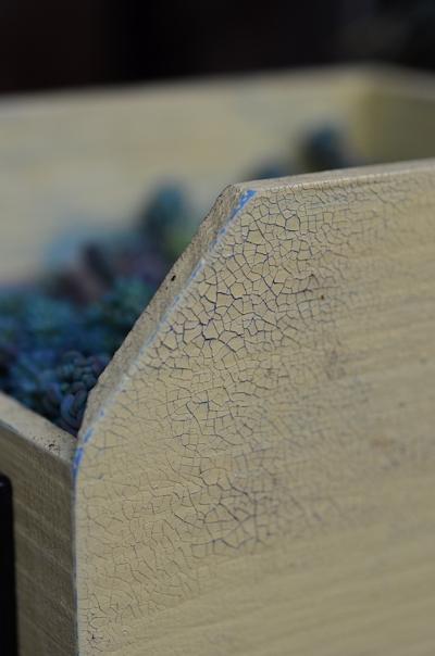 リメイク木箱にセダムの寄せ植え20150308_04