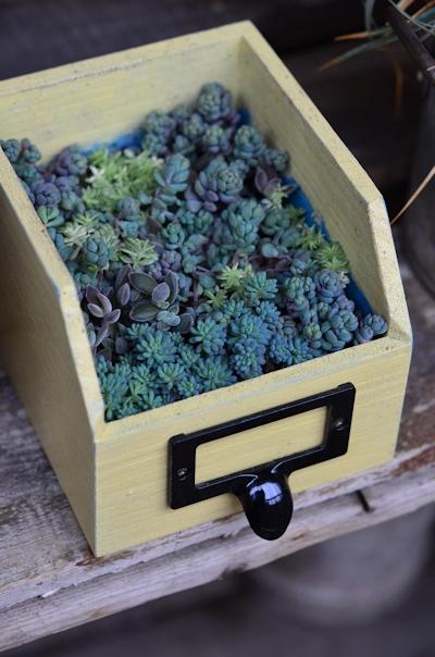 リメイク木箱にセダムの寄せ植え20150308_03