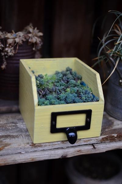 リメイク木箱にセダムの寄せ植え20150308_02