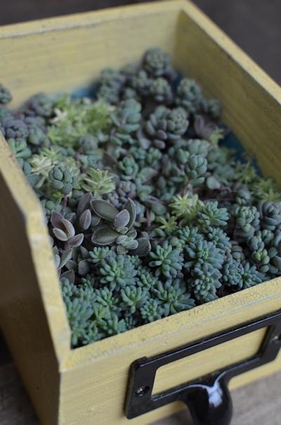 リメイク木箱にセダムの寄せ植え20150308