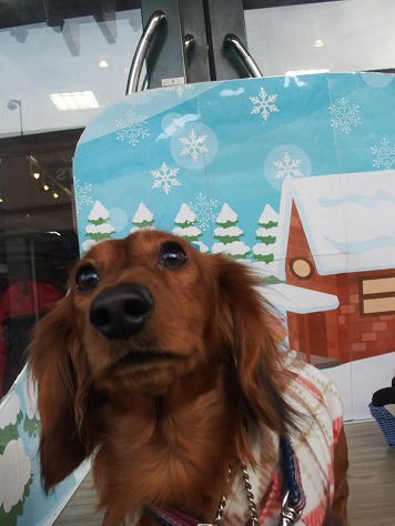 雪降ってるでちゅか?