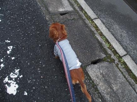 たまには、お散歩行くかな!