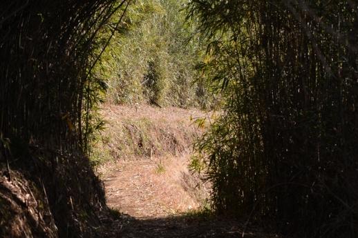 女竹のトンネル
