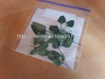 仙人草のパッケージ