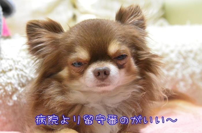 DSC_0006_20150414195614b22.jpg
