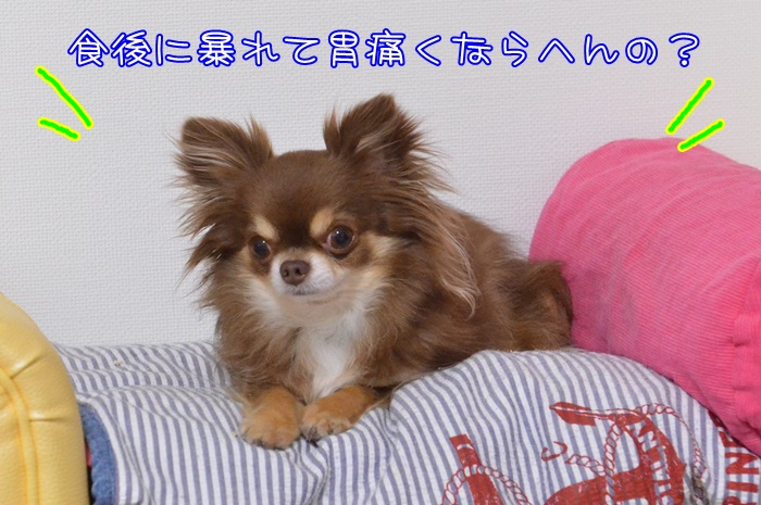 DSC_0360_20150510192828f6e.jpg