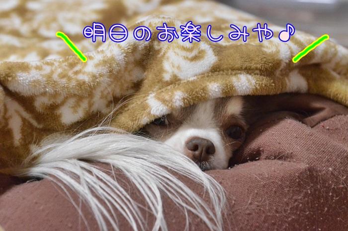 DSC_9641_20150315201330788.jpg
