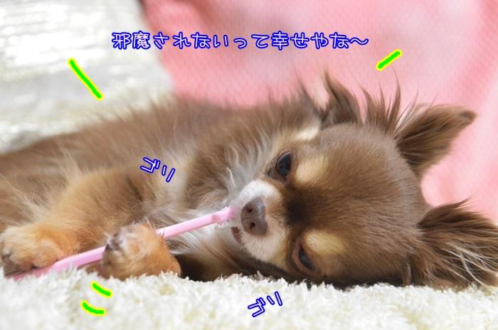 DSC_9683_2015032113161942d.jpg
