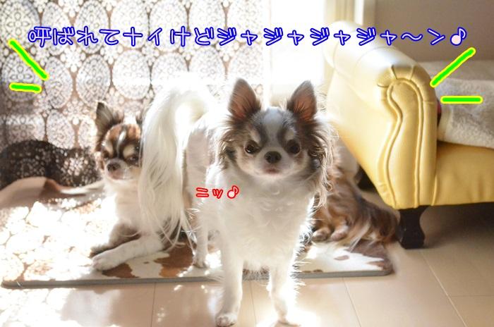 DSC_9760.jpg