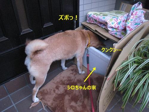 10シロちゃん家