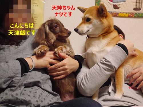 2天津飯姉ちゃん