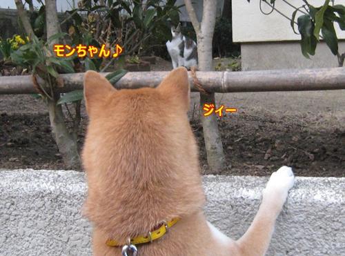 4モンちゃん