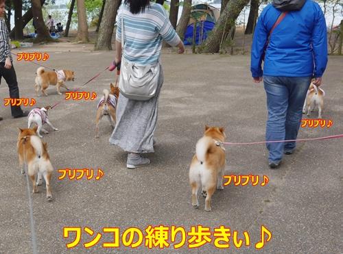 9練り歩き