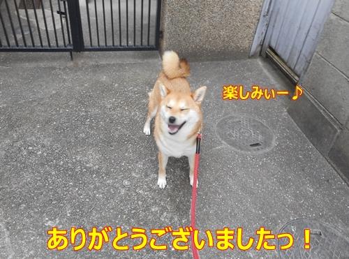 7楽しみぃ