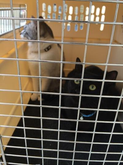 cats146.jpg