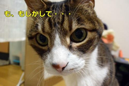 DSC_2786_201504062026523fd.jpg