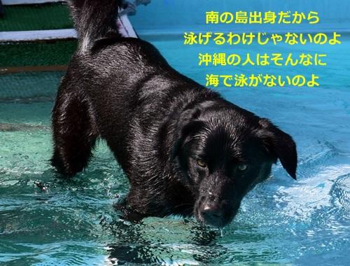 DSC_4089.jpg