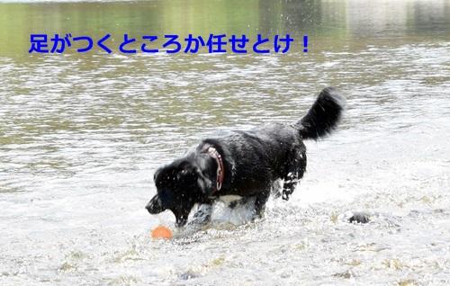 DSC_4272.jpg