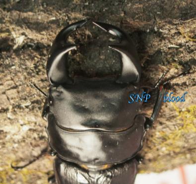 SNP♂2