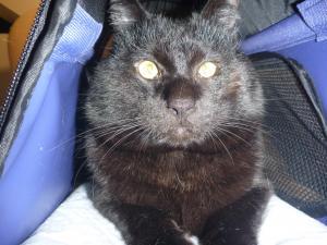 猫 内反症 術後 2