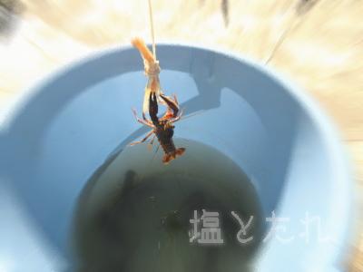 IMG_0433_20150722_01_ザリガニ釣り