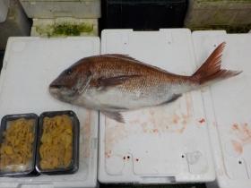 4鮮魚セット2015630