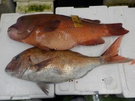3鮮魚セット2015630
