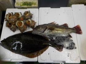 12鮮魚セット2015630