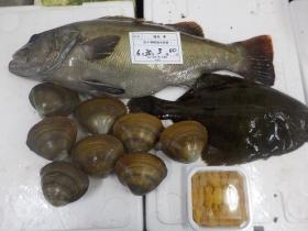15鮮魚セット2015630