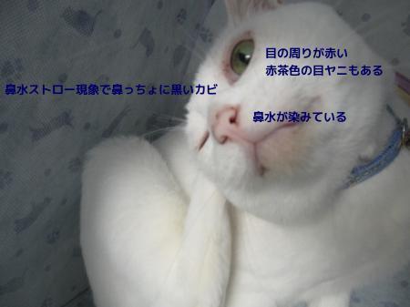 G5PoFuQKaXS4WyA1437198982_1437199225.jpg