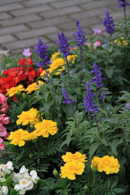 梅雨の晴れ間の夏花壇