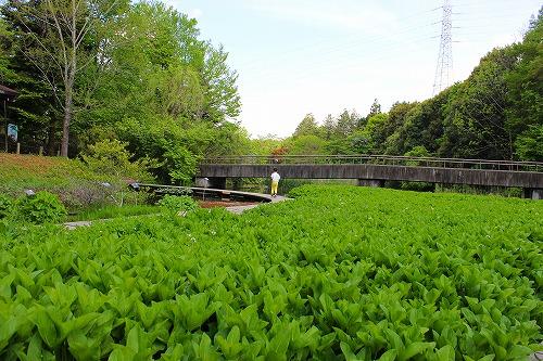 筑波実験植物園1
