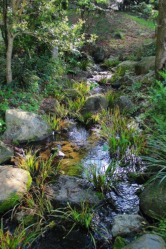 筑波実験植物園4