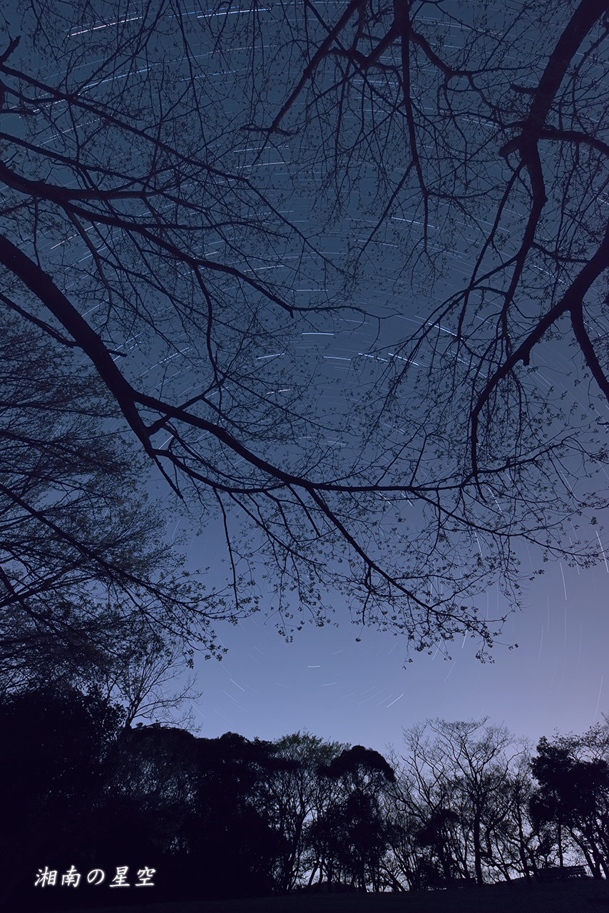 20140401_頼朝像_桜_北空