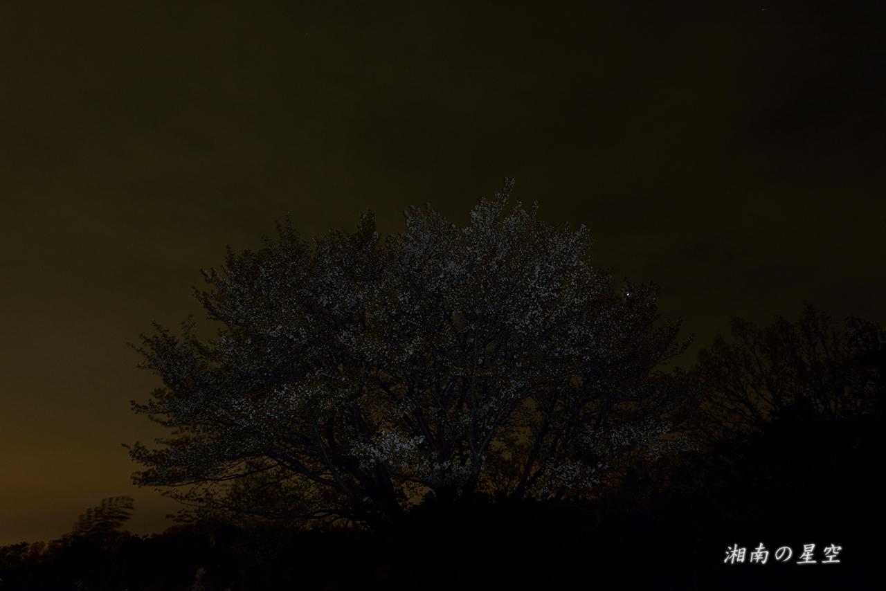 20150404_桜と皆既月食