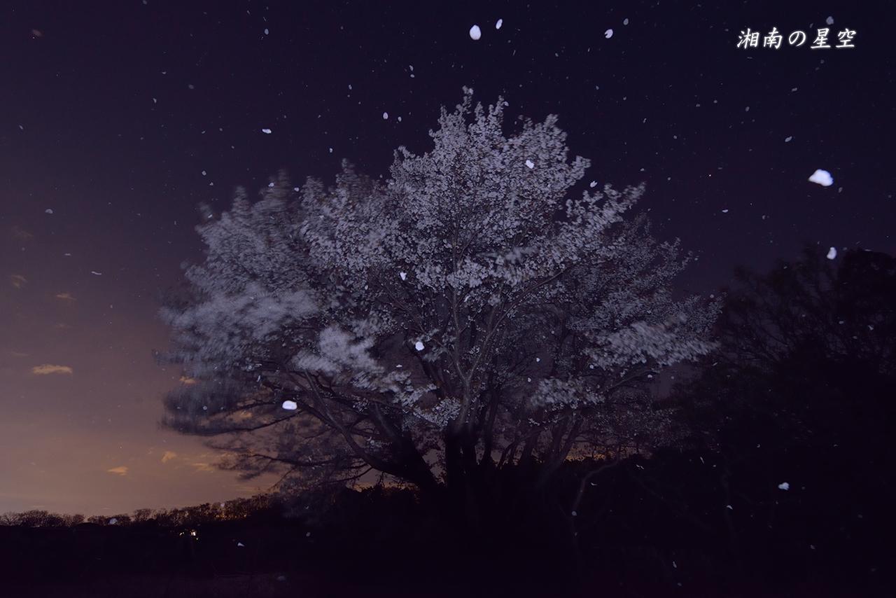 20140404_桜吹雪A