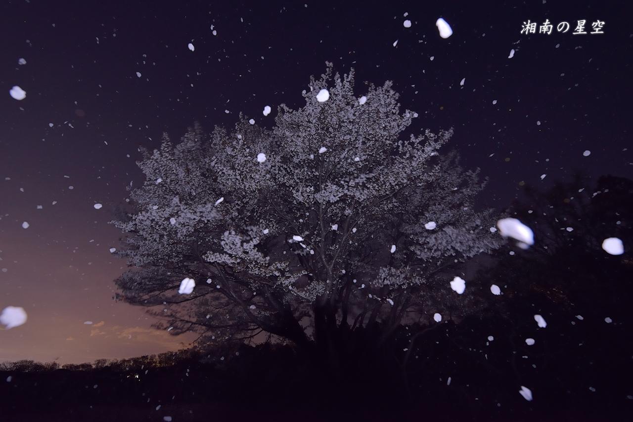 20140404_桜吹雪B