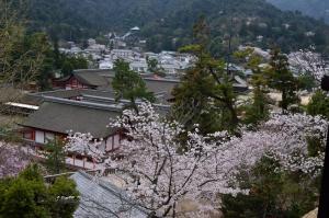 千畳閣から見た厳島神社