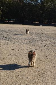 駆け寄ってくるウサギたち
